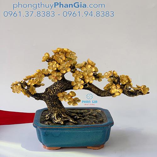 Cây Hoa Mai Mạ Vàng 24k